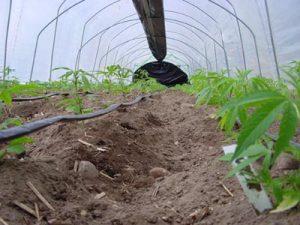 Construire une jolie serre dans son jardin - Que planter dans son jardin ...